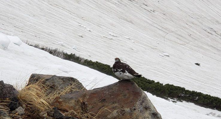 登山 中の鳥
